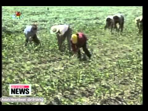N.Korea to Allow Farmers to Keep Up to Half of Produce [Arirang NEWS]