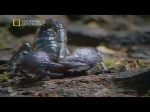 Атака насекомых Ядовитые войны
