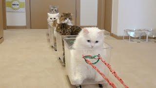뿌뿌! 고양이 기차가 출발합니다
