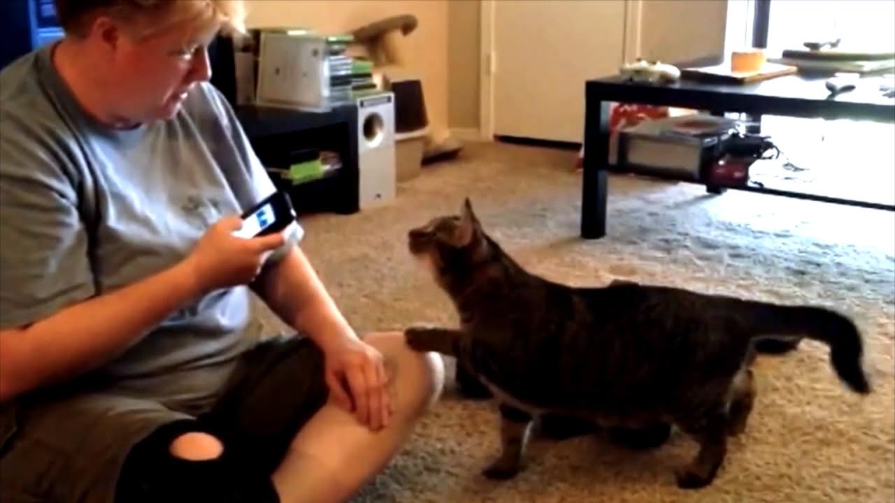 Can You Talk to Your Cat Using an App?