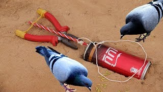 The First Unique  Simple Bird Trap Make from Pliers and a Cocacola Cans - Best bird trap Technology