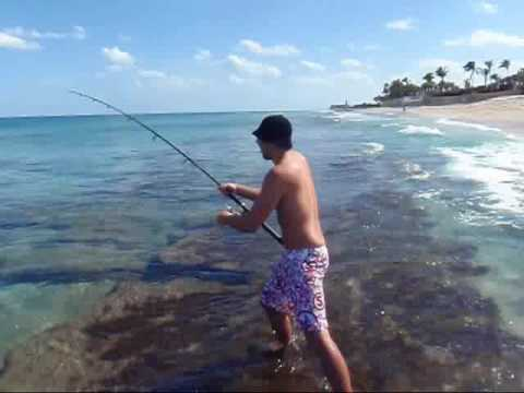 Palm Beach Island Shark Fishing