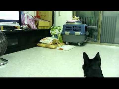 麻糬和賓果在認識新環境和新朋友。