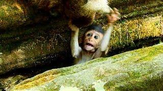 Frighten baby!!! Baby drop into hole so afraid,Baby need mum saving, BAby screaming 723