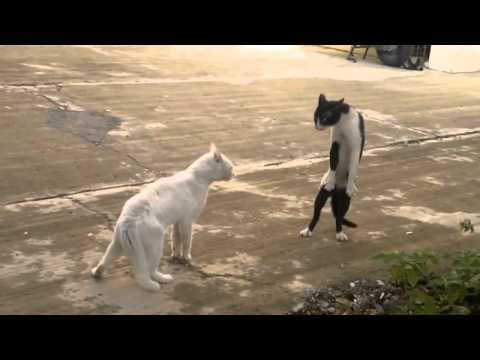 LOL Cats FAIL Compilation