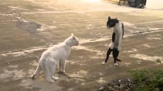 LOL Cats FAIL Compilation