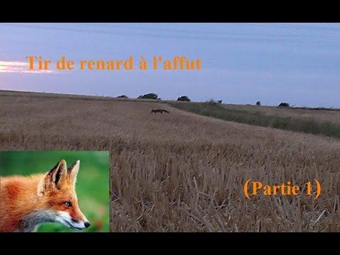 Chasse Au Renard - Affût Au Renard