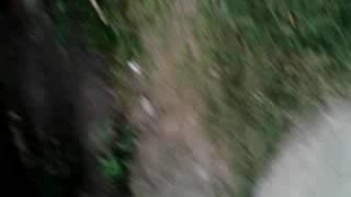 বাংলা ঠাকুমার গালাগালি