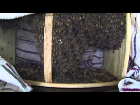 Picking up Bees at Brushy Mountain Bee Farm