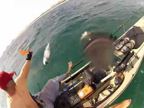 dania beach fort lauderdale, Beach Tarpon, kayak fishing, near shore, trolling