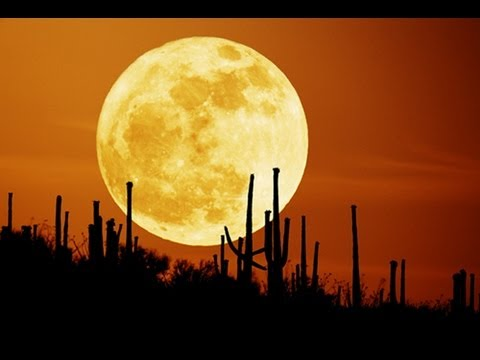 DESERT MOON WALK - BLIND HARMONICA MAN