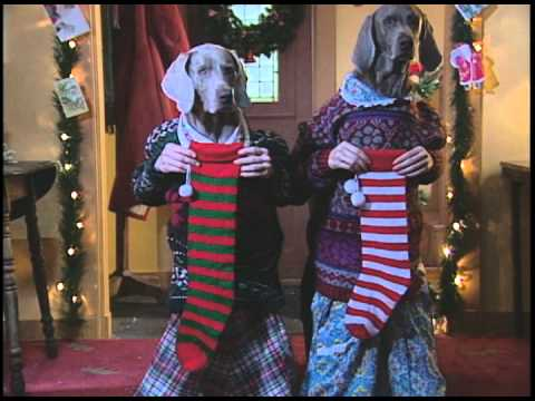 Day 11 Of The 12 Days Of Christmas By William Wegman