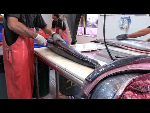 WATCH GIANT TUNA AND WAHOO GETTING FILLETED WITH THE BUBBA BLADE