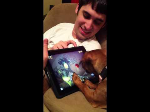 秘技!早技!!ゲームでiPadを連打する犬