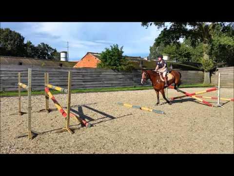 PLIJNAAR,  HORSE SPORTS SERVICES NETHERLANDS