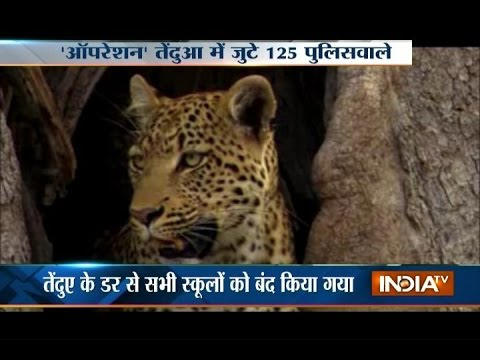 Leopard Injures 4 in Meerut, Schools and Colleges Closed Due to Fear