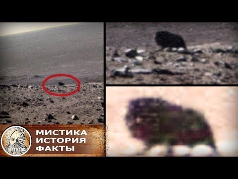 Сенсация: На Марсе обнаружили живое существо