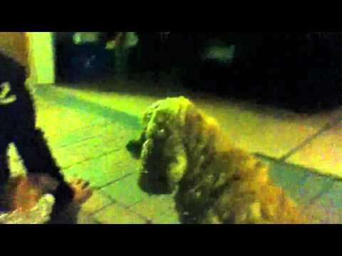 Corky The Gay Dog video