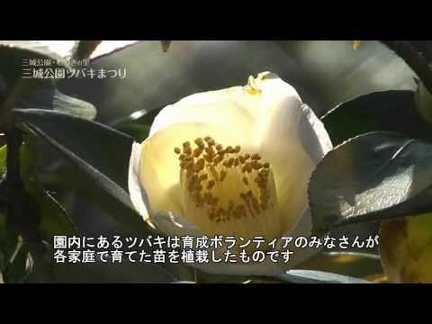 大垣市 「三城公園・むつきの里」 ~三城公園ツバキまつり~