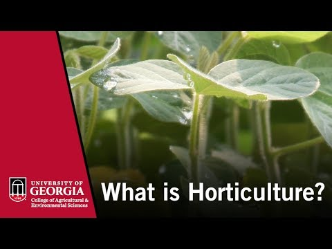 What is Horticulture?