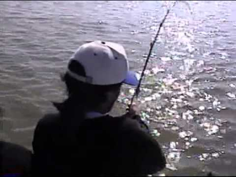 Sturgeon Fishing the South S.F. Bay with The Weste