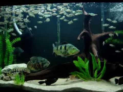 Aquario de carnivoros