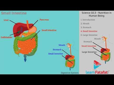 Life Internal Secrets SSC Science Class 10 - Human Body Digestive System thumbnail