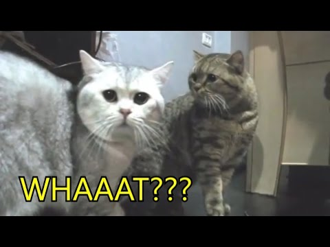 Fluffy cat has a bad day - Funny cat video thumbnail