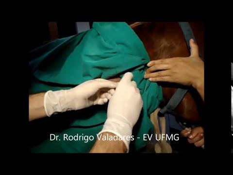 Cateter venoso central em equino