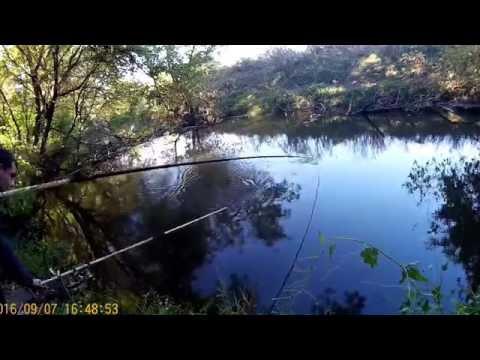 видео сазан на малых реках видео