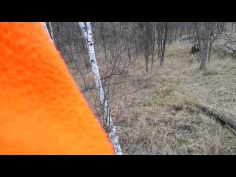 Northen Minnesota Deer Hunting 2012 #6