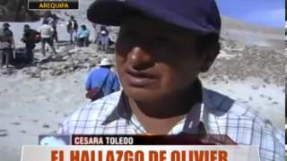 El Hallazgo De Olivier