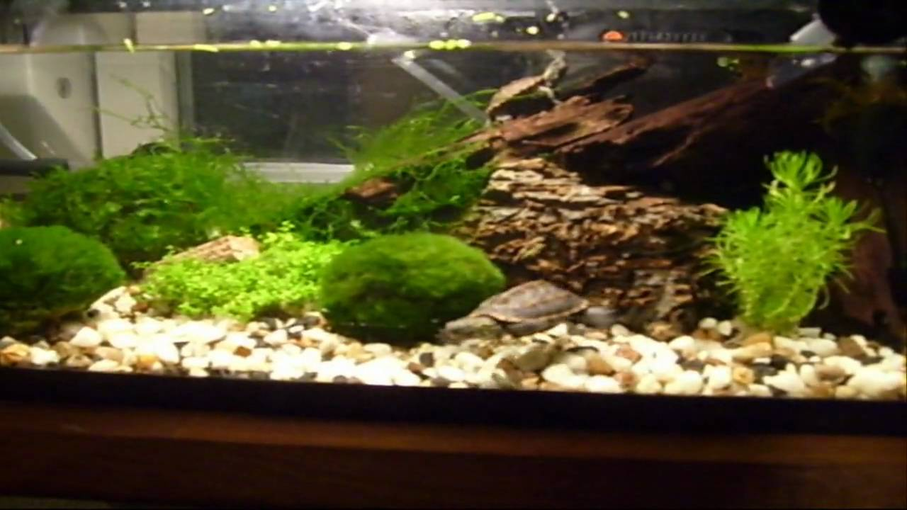 My terrarium and aquarium just listen to the beautiful for Fish tank terrarium