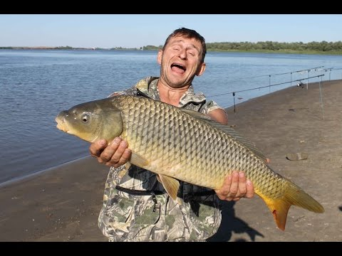 рыбалка на нижней волге на сазана