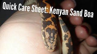 Quick Care Sheet: Kenyan Sand Boa