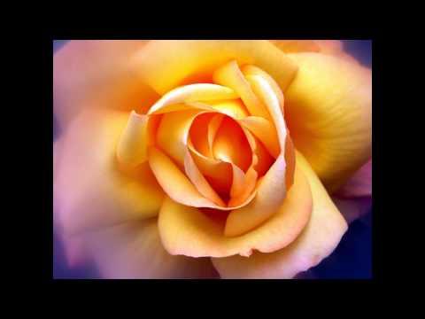 Arlo Guthrie - My Love