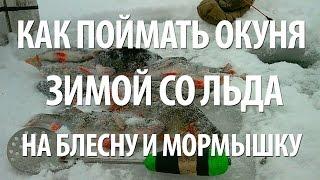 Как ловить окуня зимой. Зимняя рыбалка на окуня на блесну и мормышку с Нормундом Грабовскисом