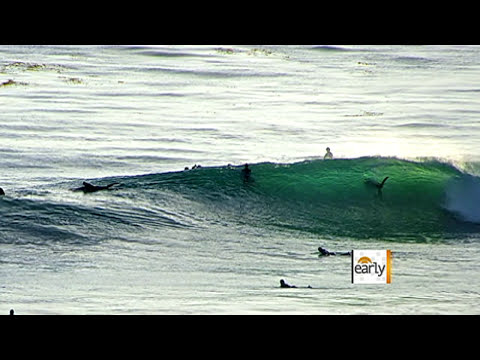 Giant shark off San Diego shore
