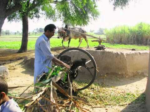 Beautiful Life of Punjab
