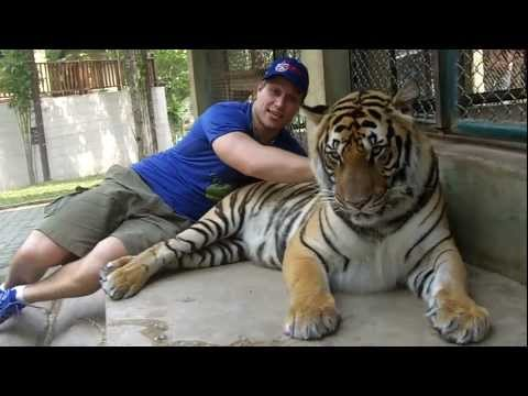 Tiger Blood | Furious Pete