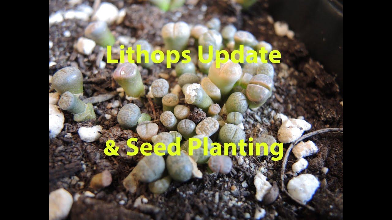 Смотреть planting seeds 2 17 фотография