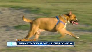 Tampa woman says her 9-month-old puppy was attacked at dog park