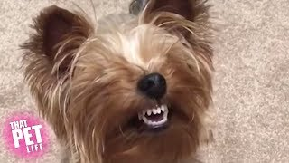 Goofy Dogs of the Week 😂 | Try Not to Laugh | That Pet Life