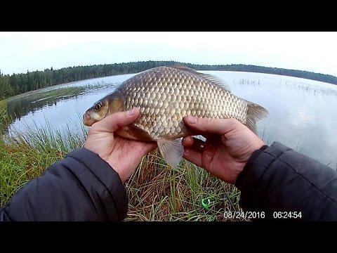 август рыбалка на карася