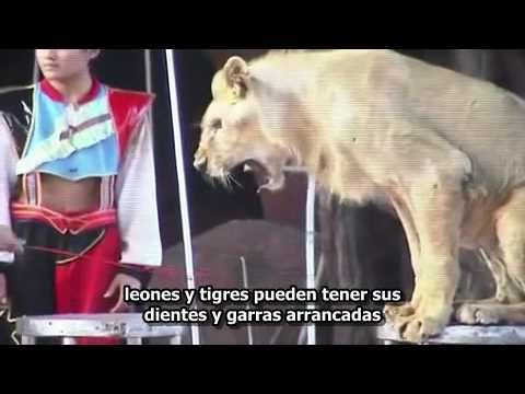 The Performance - Animales en Circos - subtítulos en español