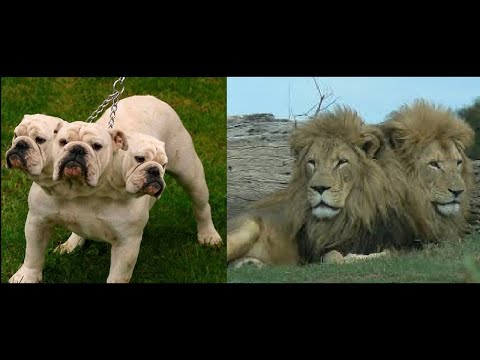 Top 10 Multi Headed Animal In The World | Amazing Creatures With Many Heads in One Body-Animal World