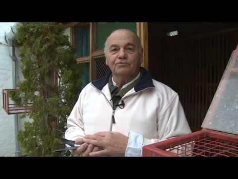 Zvonko Bogdan govori o svojoj ljubavi prema golubarstvu