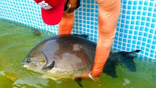 Feeding MASSIVE Canal Whales!! **POND MONSTERS**