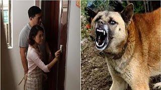 Khách đến nhà chơi chó điên cuồng sủa không cho vào nhờ vậy cứu được GĐ khỏi cảnh đẫm máu ?