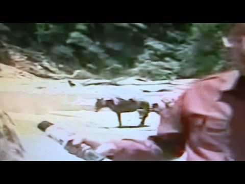 Uttarakhand Disaster - Badrinath Kedarnath Guptkashi flooded - 1000 of thousands died